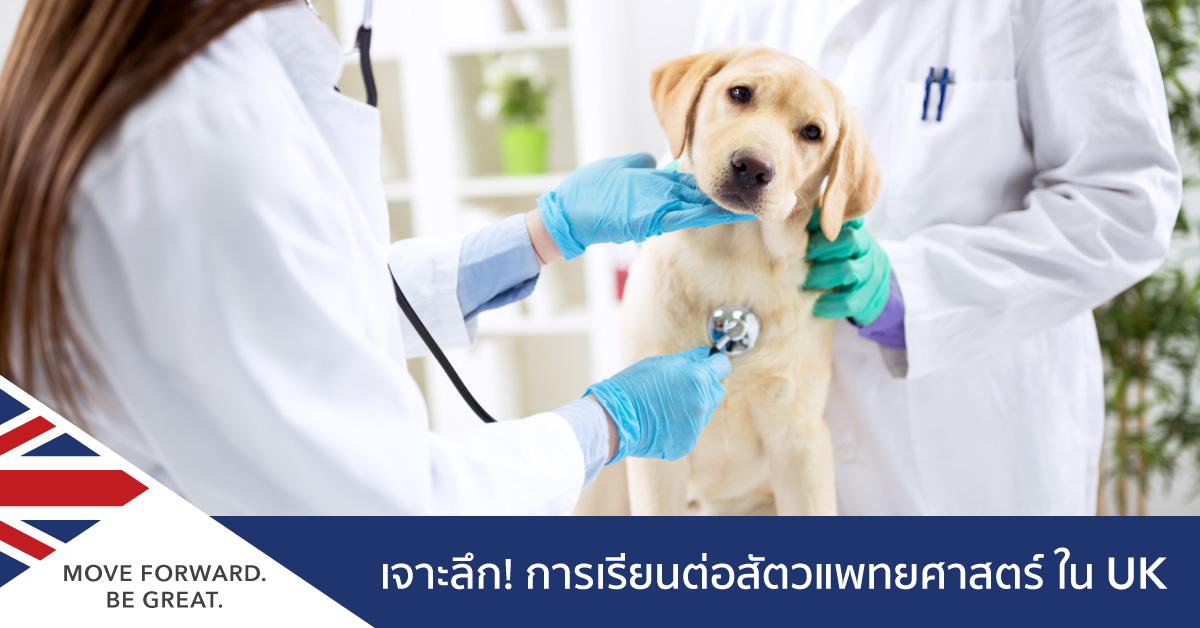 เรียนต่อสัตวแพทยศาสตร์ในอังกฤษ